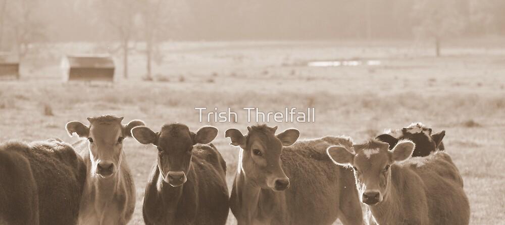 Hungry by Trish Threlfall