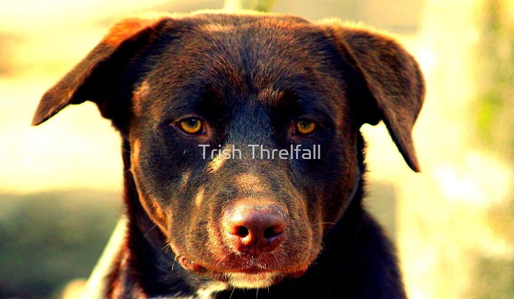 Sam  by Trish Threlfall