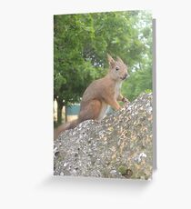 Hi There (Wild squirrel) Greeting Card