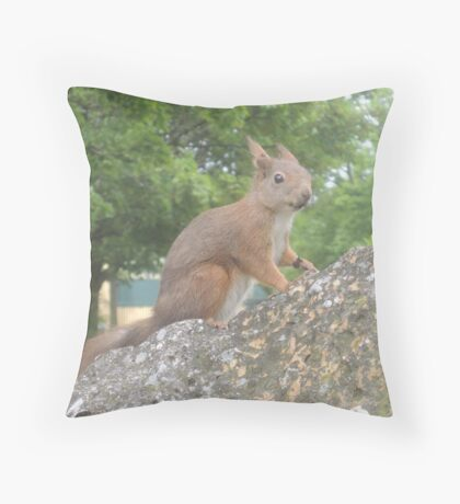 Hi There (Wild squirrel) Throw Pillow