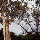 Hidden Rainbow by Robert Phillips