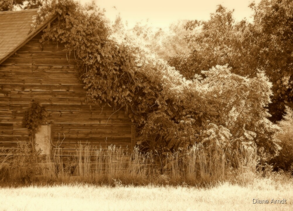 Natures Insulation...Star Idaho by Diane Arndt