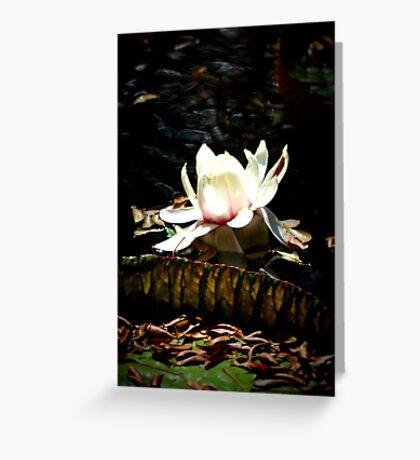 Waterlily Flower Greeting Card