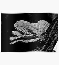 Chicken Of The Woods Shelf Fungi - Laetiporus sulphureus Poster