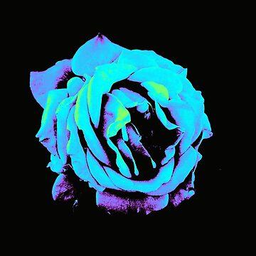 blue rose by bonika