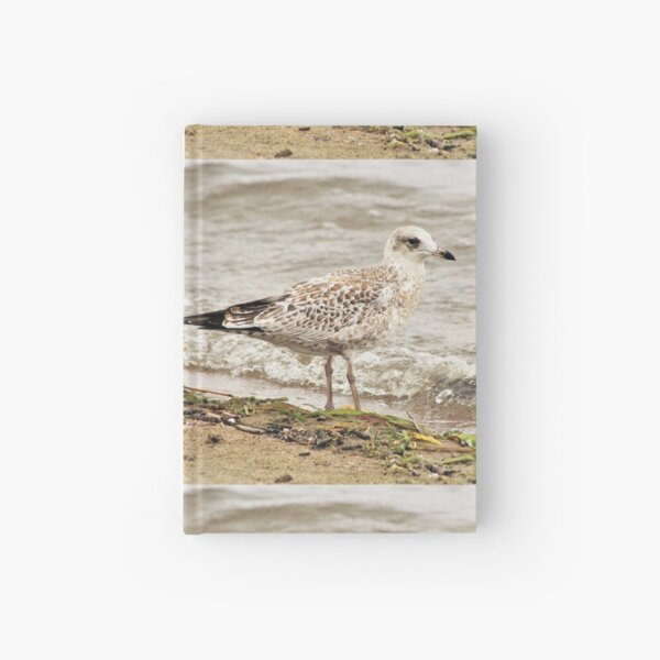 Seagull On The Beach Hardcover Journal