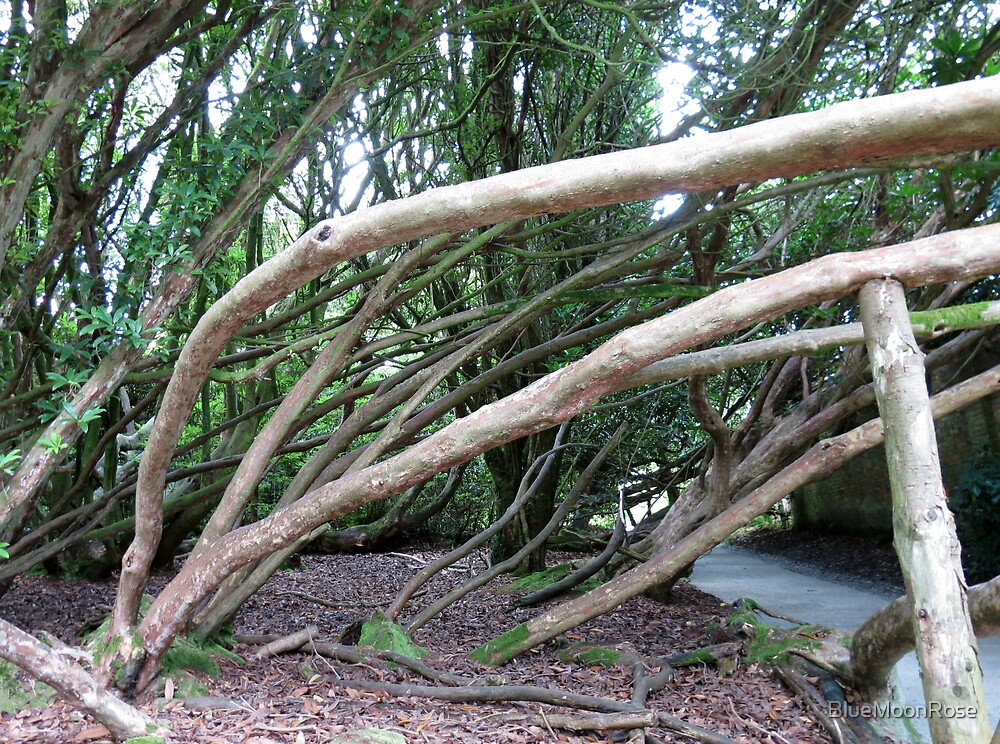 Crazy Trees - Lost Gardens of Heligan by BlueMoonRose