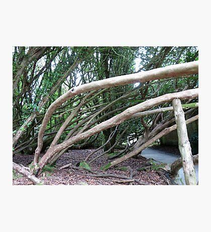 Crazy Trees - Lost Gardens of Heligan Fotodruck