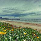 Spring by Shari Mattox-Sherriff