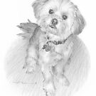 Curious dog drawing by Mike Theuer