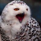 snowey owl by smurfette57
