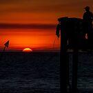 Last light - Heron Island - Australia by Anthony Wilson