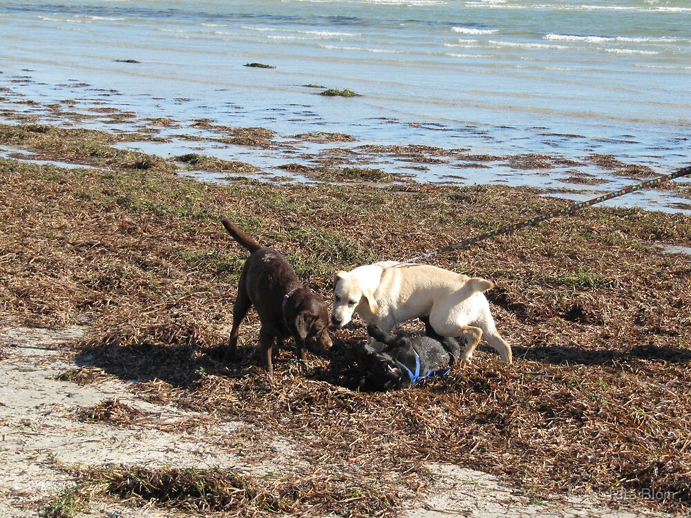 'A ROUGH & TUMBLE ON THE BEACH'! Fort Glanville. S.A. by Rita Blom