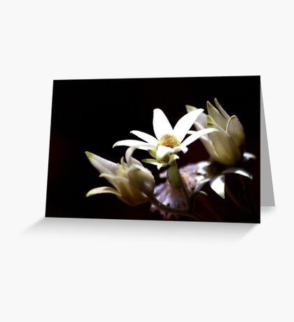 North Head Manly - Flannel Flowers in colour Greeting Card