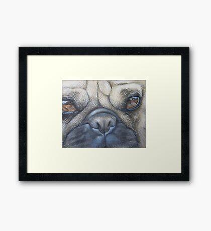 Pug face Framed Print