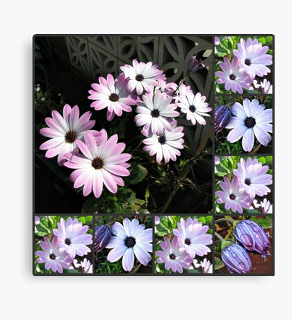 Pretty Cape Daisies Collage Leinwanddruck