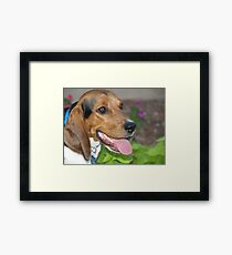 Tub Tub the Beagle Framed Print