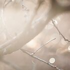 Winter Light by Sarah Ciccone Photography