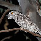 Tawny Frogmouth by ChrisCoombes