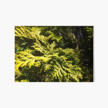 Cedar Maze, Closeup Texture, Beauty of Nature by Courtney Hatcher Art Board Print