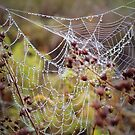 Tangled web by Sandra Pearson
