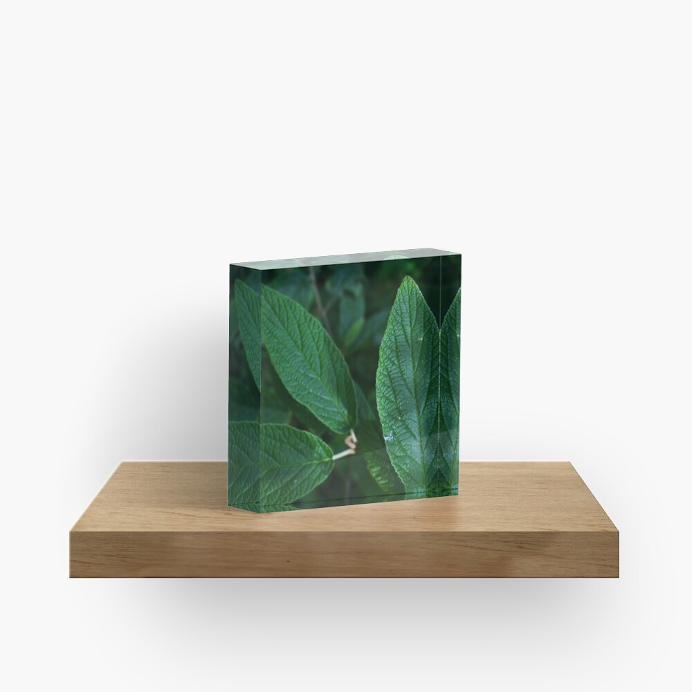 Green Leaf  Acrylic Block