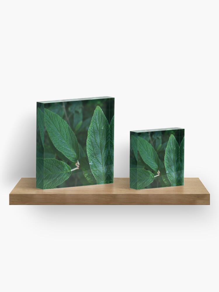 Alternate view of Green Leaf  Acrylic Block