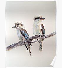 Kookaburras Poster