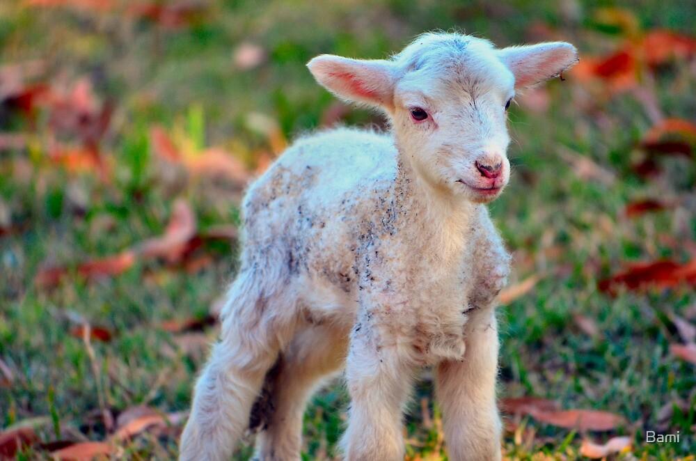 Newborn Lamb by Bami