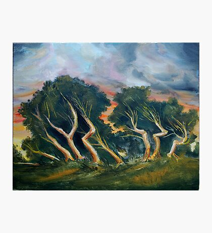 Cyprus trees oil painting Photographic Print