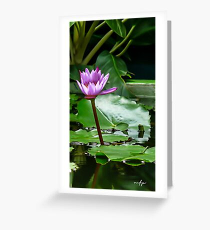 Thail Lily 2 Greeting Card