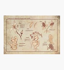 Varieties of Magical Plants and Herbs Photographic Print