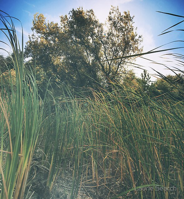 Beyond the Grass by Laurie Search