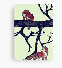 Foxes First Meeting Canvas Print