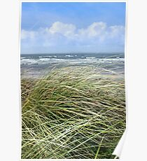 Kerry dune grass Poster