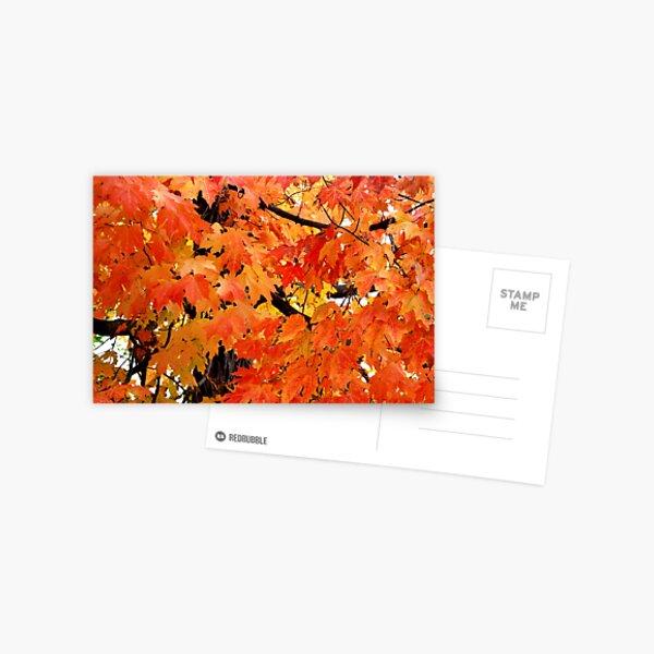 Autumn Maple Postcard