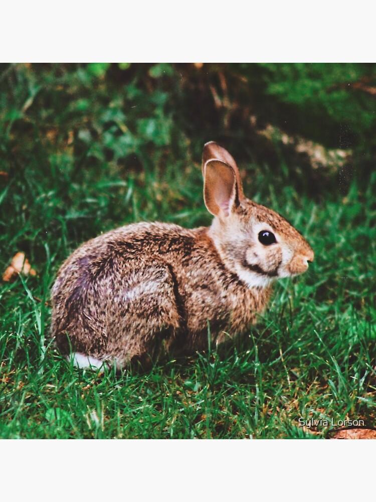 Backyard Bunny by sylviatulane