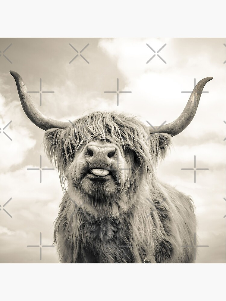 Cheeky Highland Cow  by wildtribe