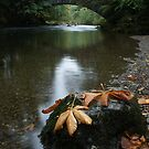 Autumn river by Mark Walker