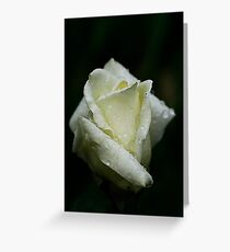 Ivory Rose With Waterdrops Greeting Card