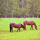 Horses in the rain by marchello