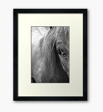 A Horse's Eye Framed Print