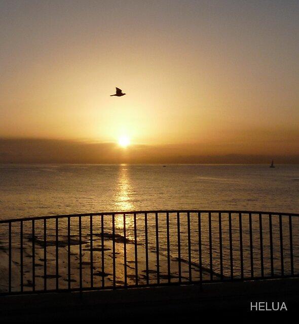 Bird Traversing the Sun at Dawn by HELUA