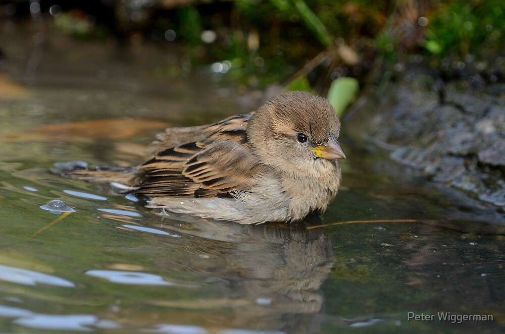 Having a bath by Peter Wiggerman