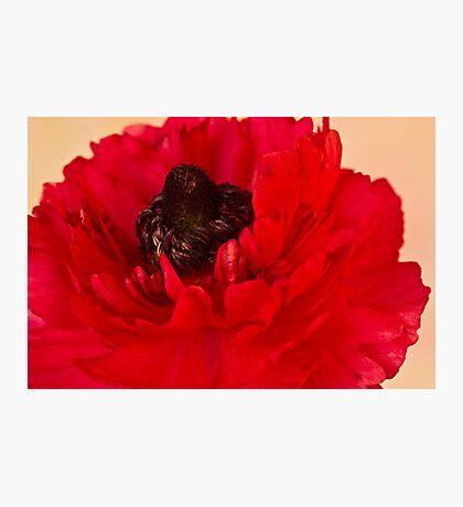 Vibrant Petals Photographic Print