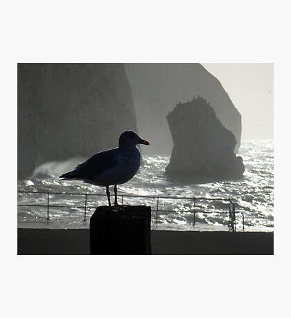Head Gull Photographic Print