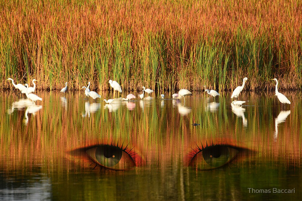 Eyes in the Marsh by TJ Baccari Photography