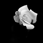 Single White Rose by dioptrewho