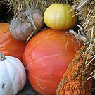 Pumpkins and Gourds by PicsbyJody