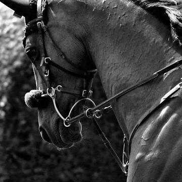 Hickstead '13 - Longines International Horse Show by SideoftheAngels